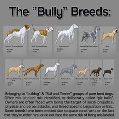 Bully breeds, I love bullies!!  in fact, one of my dogs is a mixed with a bully. and she's part boxer and part lab.