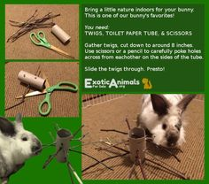 Twig Tree - DIY Bunny Rabbit Toys that are Cheap and Easy to Make. Awesome for all sorts of small animals. Bunny approved DIY Rabbit toys!