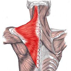 Trapezius Muscle: Stiff Neck, Headache, Eye, Jaw, Pain - The Wellness Digest Fitness Workouts, Trigger Point Massage, Neck Headache, Foam Roller Exercises, Jaw Pain, Stiff Neck, Muscle Anatomy, Self Massage, Trigger Points