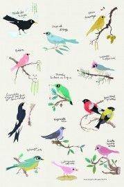 birds poster / vogeltjes poster