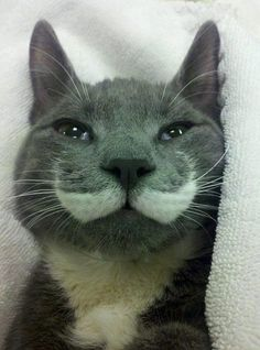 Mustache Cat wishes you a spiffing Meow Monday!