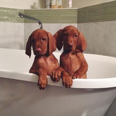 Bath time     @KaufmannsPuppy                                                                                                                                                   More