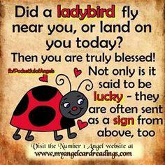 58 Best Ladybug quotes images in 2018 | Ladybug, Bugs