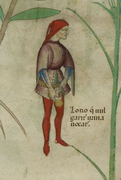 British Library, Sloane 4016, detail of f. 59. Herbal. Lombardy, c.1440.