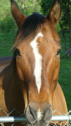 he is cute.. I will one day have a horse!