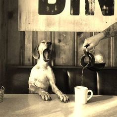 dog badly in need of coffee