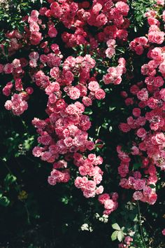 Summer in the city welcomes creativity. We have news about Ravenscourt Apothecary products, both new and upcoming, and are taking a break till August Flowers Nature, Exotic Flowers, Purple Flowers, Pink Roses, Beautiful Flowers, Yellow Roses, Cute Wallpaper Backgrounds, Flower Wallpaper, English Rose Tattoos