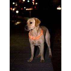 """Sicherheitsband """"See me""""    In der dunklen Jahreszeit ist es besonders wichtig, dass Ihr Hund von anderen Verkehrsteilnehmern gut wahrgenommen wird.    Bestell-Nr.: 720202"""