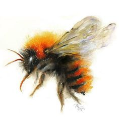 Bumble Bee Set of 4 Watercolor Giclee Prints Wildlife