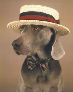 Фото Собака в шляпе и с бантиком