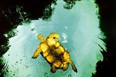 Exposição mostra fotos dos animais da Amazônia - http://colunas.revistaepoca.globo.com/planeta/2013/06/07/exposicao-mostra-fotos-dos-animais-da-amazonia/ (Fotos: Carrie Vonderhaar/Divulgação)