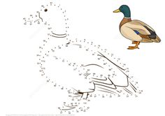 Mallard Duck dot to dot from Birds category. Select from 32012 printable crafts of cartoons, nature, animals, Bible and many more. Colouring Pages, Coloring Books, Printable Crafts, Printables, Duck Crafts, Dots Free, Kids Sheets, Club Kids, Craft Club