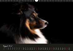 Dogs in a different Light - CALVENDO Kalender - #hunde #fotografie #tierfotografie #Kalender #calvendo