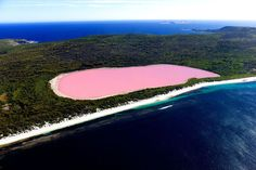 Lake Hillier, Australia Despite the unusual hue, the lake exhibits no known adverse effects upon humans. From above the lake appears a solid bubble gum pink, but from the shoreline it looks more like a clear pink hue is in the water. The shoreline is also covered in salt crust deposits