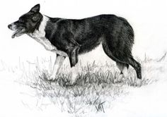 Working Collie by Northernlight74 - Use the 'Create Similar' button to commission an artist to create your own artwork.