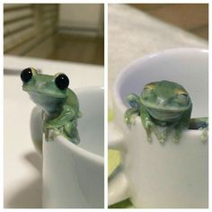 This frog is just ._.