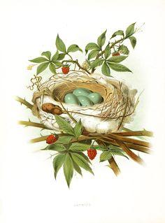 The Graffical Muse: bird nest
