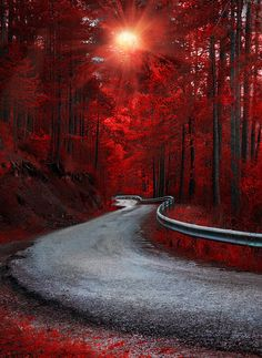 Travel Discover Nature - Landscape - title Dreaming in Red - by Alfon No Scenery Photography Landscape Photography Tips Beautiful Nature Wallpaper Beautiful Landscapes Beautiful Roads Beautiful Images Beautiful Sunset Nature Images Nature Pictures Landscape Photography Tips, Scenery Photography, Photo Scenery, Night Photography, Abstract Landscape, Landscape Paintings, Acrylic Paintings, Forest Landscape, Landscape Photos