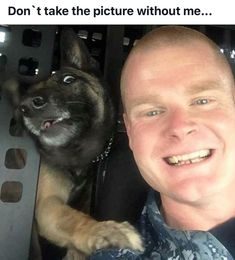 The face you make when you're frantically jumping into the photo at the last second! #funny #dogs #mwd #gsd #cute