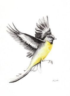 ARTFINDER:  WAGTAIL, bird, birds, animals, wildl... by Karolina Kijak -  Original watercolors of Wagtail Paper 300g  100% cotton, high quality pigments size 23x31cm  Follow me on facebook: https://www.facebook.com/kijakwaterc...