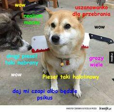 Best Memes, Some Fun, Good Times, Haha, Corgi, Humor, Pets, Funny, Kawaii