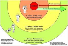 Easy Dogs / Reaktivität an der Leine behutsam und effektiv beheben, Distanz-Emotions-Training nach Bina Lunzer, Salena Maue