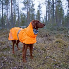 Our Official Hurtta Extreme Warmer Dog Coat - Orange is the perfect product for almost any pet at an exceptional value! Dog Suit, Dog Cafe, Pet Steps, Dog Raincoat, Fun Days Out, Pet Paws, Dog Activities, Dog Jacket, Dog Costumes