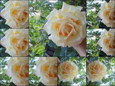 Fotos de gatos flores fruta tanbien son algunas de las cosas que yo les ...