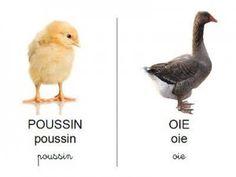 Référentiels pour travailler le vocabulaire en français en maternelle (animaux, fruits, légumes..). Peuvent aussi être utilisées en élémentaire