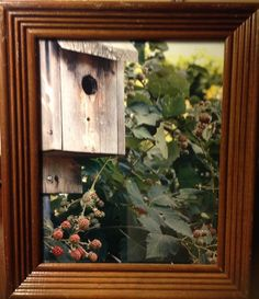 Birdhouse in the berries...by lfp