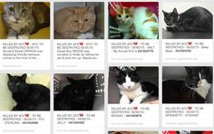 CATS KILLED BY ACC 05/02/15 - SHAME, ACC