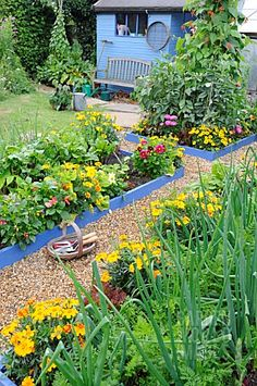 LOVE the brightly painted raised beds and the mix of vegetables and flowers within them!!