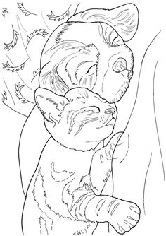 Creative Haven Lovable Cats and Dogs Coloring Book -- 5 sample pages