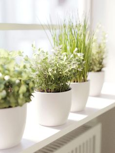 Plants on Behance