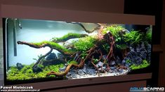 Aquarium Landscape, Nature Aquarium, Planted Aquarium, Zoo Architecture, Tropical Fish Tanks, Vivarium, Freshwater Aquarium, Aquascaping, Fresh Water