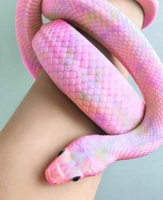 Great Pic Snake Pet pink Popular We often get questions about what's an ideal . : Great Pic Snake Pet pink Popular We often get questions about what's an ideal beginner-friendly snake for those a new comer to the Pretty Snakes, Cool Snakes, Colorful Snakes, Beautiful Snakes, Colorful Animals, Pink Animals, Pretty Animals, Cute Little Animals, Cute Funny Animals