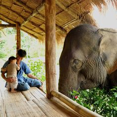 Elephant sanctuary, Thailand. You get this close and closer on the ROV Cambodia Elephant program!