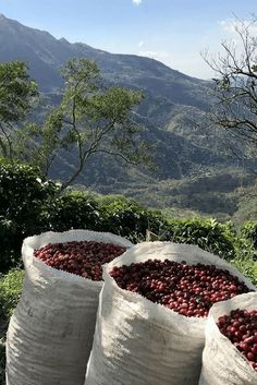 Alumbre coffee beans in a gorgeous Central American setting. Coffee Farm, Coffee Plant, Coffee Brewer, Coffee Type, My Coffee, Coffee Shop, Mocha Coffee, Starbucks Coffee, Coffee Drinks