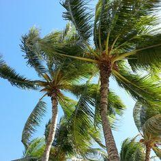 Hawaiian icon