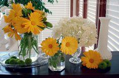 rp_calendula-orange-yellow-flowers.jpg