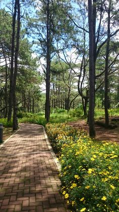 Camp John Hay,  Baguio City Baguio Philippines, Philippines Travel, City Aesthetic, Travel Aesthetic, Beautiful Places To Visit, Beautiful World, Places To Travel, Places To See, Black And White Wallpaper Iphone