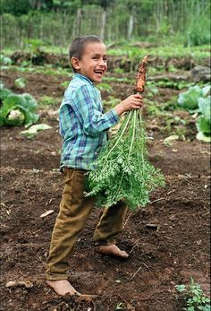 Organic gardens improve a family's diet and income.    With SHI's help, whole families work on establishing organic vegetable gardens near their homes. Most families working with SHI have never grown garden vegetables before working with our program. S