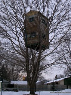 tree house - Google-haku