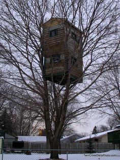 tree house - Google-haku