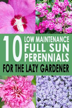 GREAT list of full sun perennials that are easy to care for and low maintenance plants. Perfect for the lazy gardener (like me!) who doesn't want to spend all summer landscaping the garden border. Click through to find out what they are. #fromhousetohome #plants #gardenideas #gardeningtips #gardening