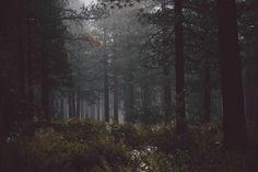 adventure, black, dark, darkness, dreams, explore, fog, foggy, forest, grey, grunge, hipster, indie, inspiration, magical, nature, old, pale, rain, sad, sadness, travel, vintage