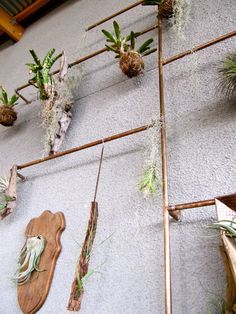 Clever use of reclaimed wood and copper piping to turn air plants into a wall display