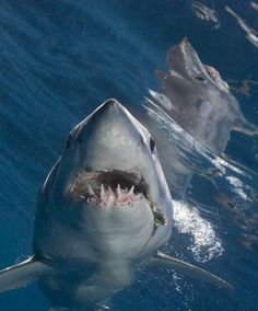 Mako Shark...say cheese!yeeowh got sumthin stuck tween muh teeth!!