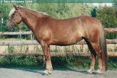 Finnhorse - mare Muuttuva Harness Racing, Show Jumping, Dressage, Country Of Origin, Pony, Horses, Animals, Pony Horse, Animales