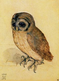 'Albrecht Duerer Kleine Eule The Little Owl' by Masterpieces Of Art on artflakes.com as poster or art print $18.03